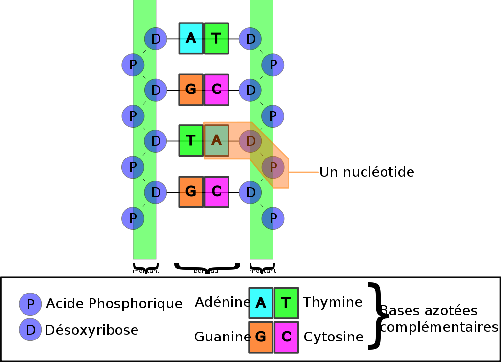 chaîne de levage 4 brins